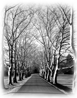 Road to Fonthill 11x14